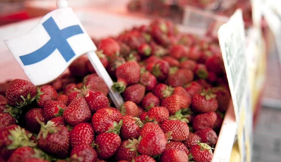 Клубника, собранная в Финляндии
