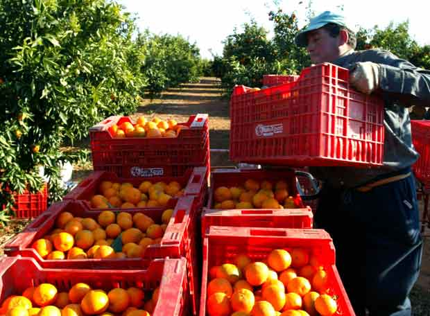 сельскохозяйственный работник в Испании