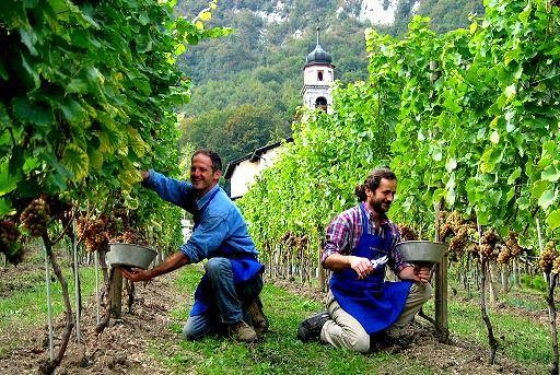 Сезонная работа в Италии