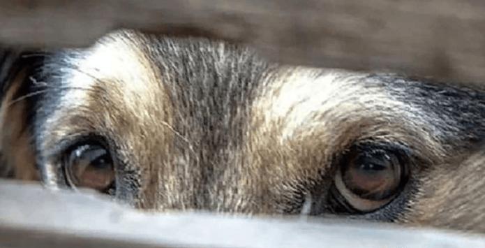 Грустные глаза собаки