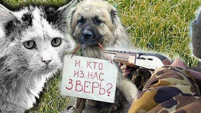 Кошка и собака под дулом ружья
