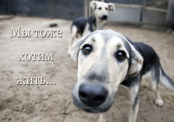 Собака, смотрящая в объектив